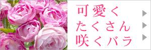 可愛くたくさん咲くバラ特集