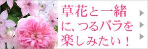 草花と一緒にツルバラを楽しみたい!