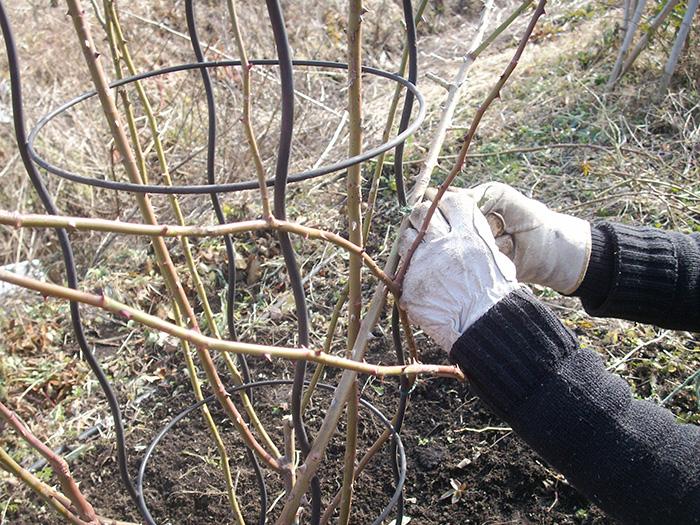 枝を横に固定