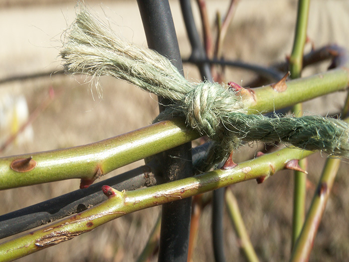 枝の結び方
