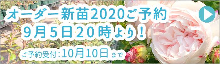 オーダー新苗2020